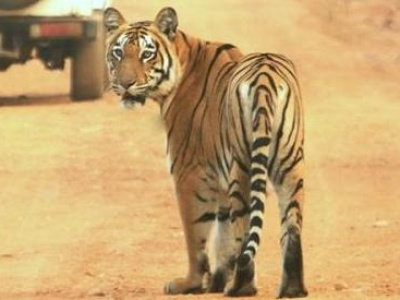 Kanha Jungle Safari by Explorers Pune Mumbai