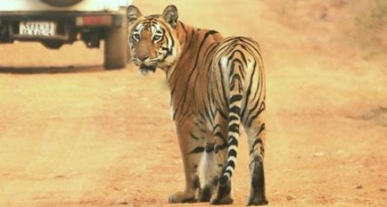 Kanha Jungle Safari by Explorers Pune Mumbai