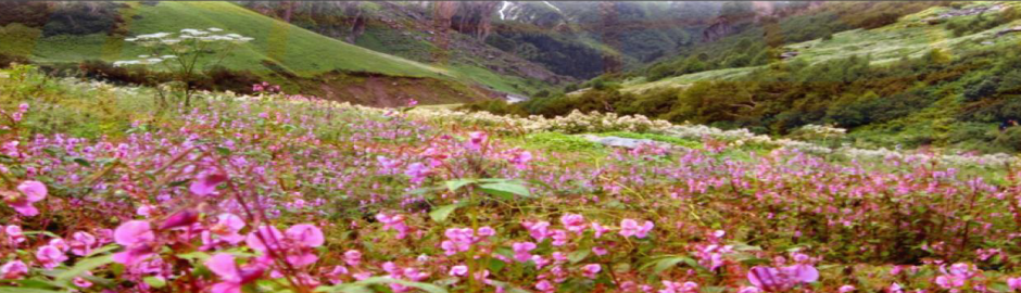 Explorers valley-of-flowers-hemkund